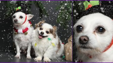 Christmas Photoshoot of Pet Dogs is Going Viral For Their Expressions! Check Funny Reactions on Their Cute Pics