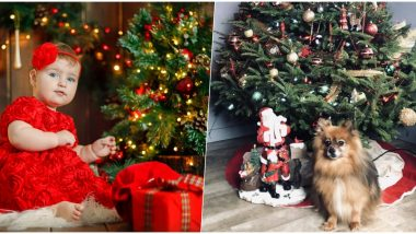How to Keep Your Christmas Tree Safe From Kids and Pets: Ways to Baby-Proof and Make a Pet-Friendly Christmas Decor