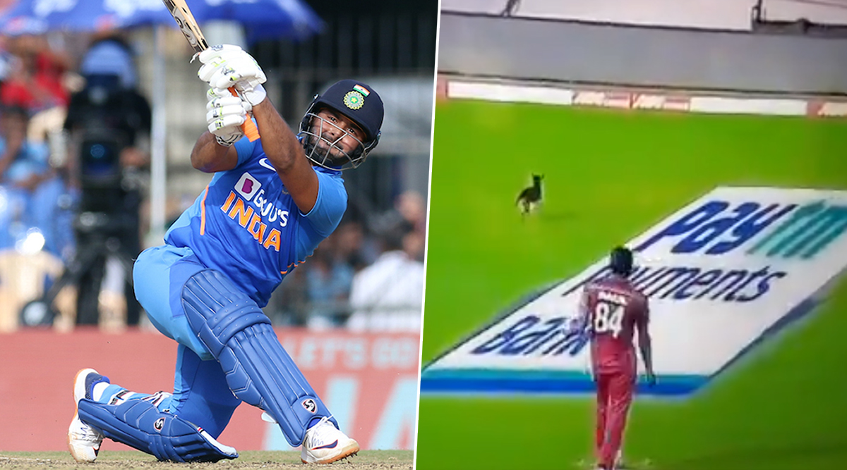 India vs West Indies 1st ODI 2019: Dog Comes Out of Nowhere to Interrupt the IND vs WI Cricket Match (Watch Video)