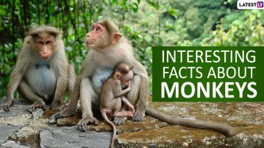 Monkey Day 2019: Top 15 Fun And Interesting Facts About Monkeys That Will Blow Your Mind Away