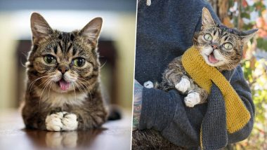 Lil Bub, Internet's Famous Cat With Over 2 Million Followers, Passes Away (View Pics of The Celebrity Feline)