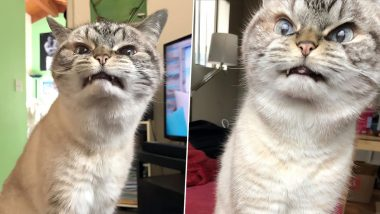 Loki, The 'Vampire' Cat Goes Viral For Her 'Evil' Looks (See Pictures)