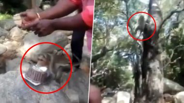 Monkey Steals Cake of Man Celebrating His Birthday in The Jungle, Watch Funny Video