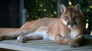 California Woman Punches Mountain Lion That Tried to Attack Her Dog