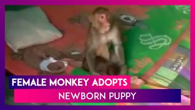 Female Monkey Adopts Newborn Puppy In Haridwar