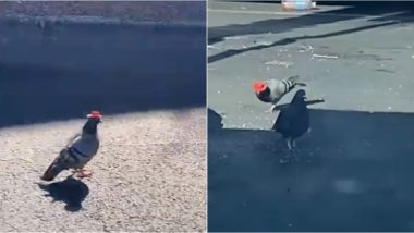Pigeons Wearing Tiny Colourful Cowboy Hats Spotted in Las Vegas! Mystery Birds Are The Latest Internet Sensation (Watch Video)