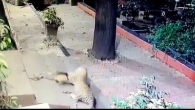Leopard Attacks Sleeping Dog in Mumbai's SEEPZ, Shocking Video Goes Viral