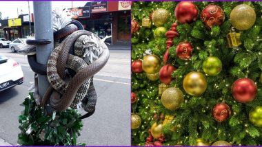 Group of Deadly Snakes Wrapped Around Christmas Tree on Australian Street, Scary Pic Goes Viral