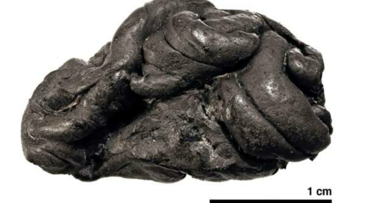 5700-Year-Old Chewing Gum Helps to Create Image of Girl Who Consumed it in Stone Age