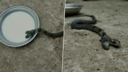 Two-Headed Snake Found in West Bengal Village (View Pics and Video)