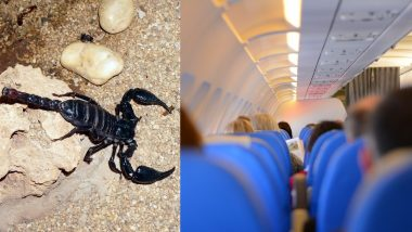 Scorpion Stings Woman on United Airlines Flight; Attendants Capture It
