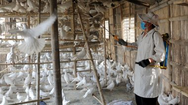Bird Flu Outbreak in India: Avian Influenza Confirmed in Poultry Farms Across 8 Districts in Maharashtra, Crows Affected in Uttarakhand's Rudraprayag; Check Status of Affected States