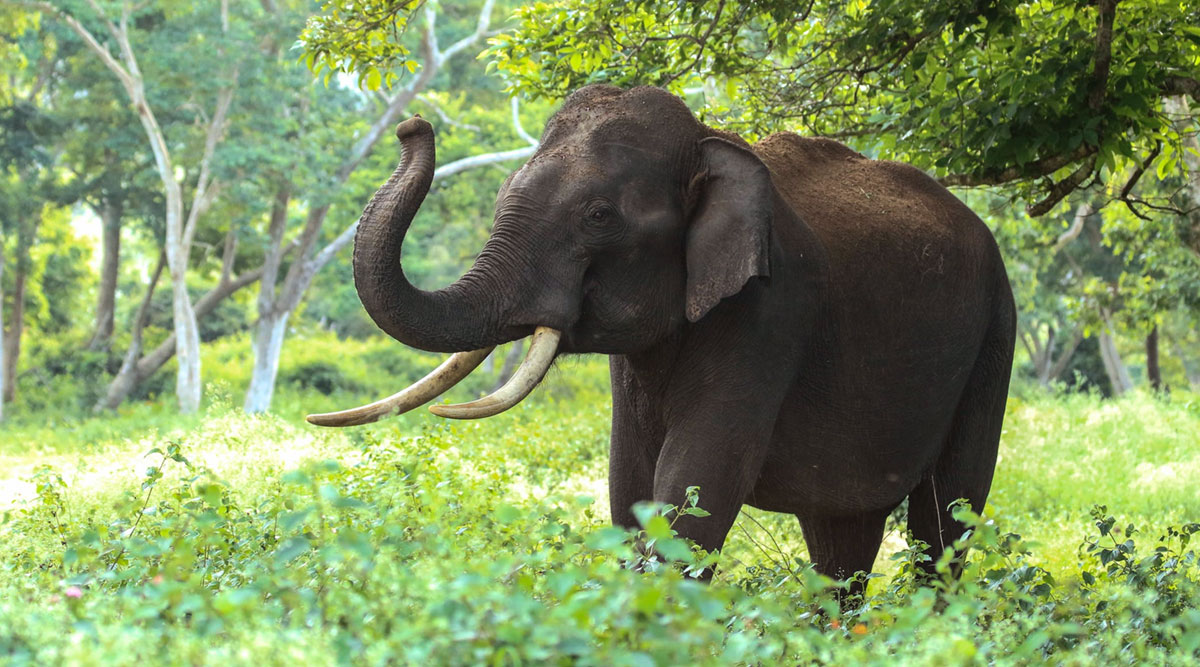 Pregnant elephant in Kerala bites cracker-stuffed fruit, dies standing in river