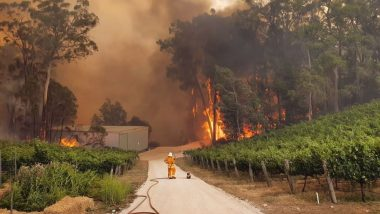 Australia Bushfire: Heartbreaking Photo of Koala and Firefighter Helplessly Watching the Forest Burn Intensifies Climate Change Fear