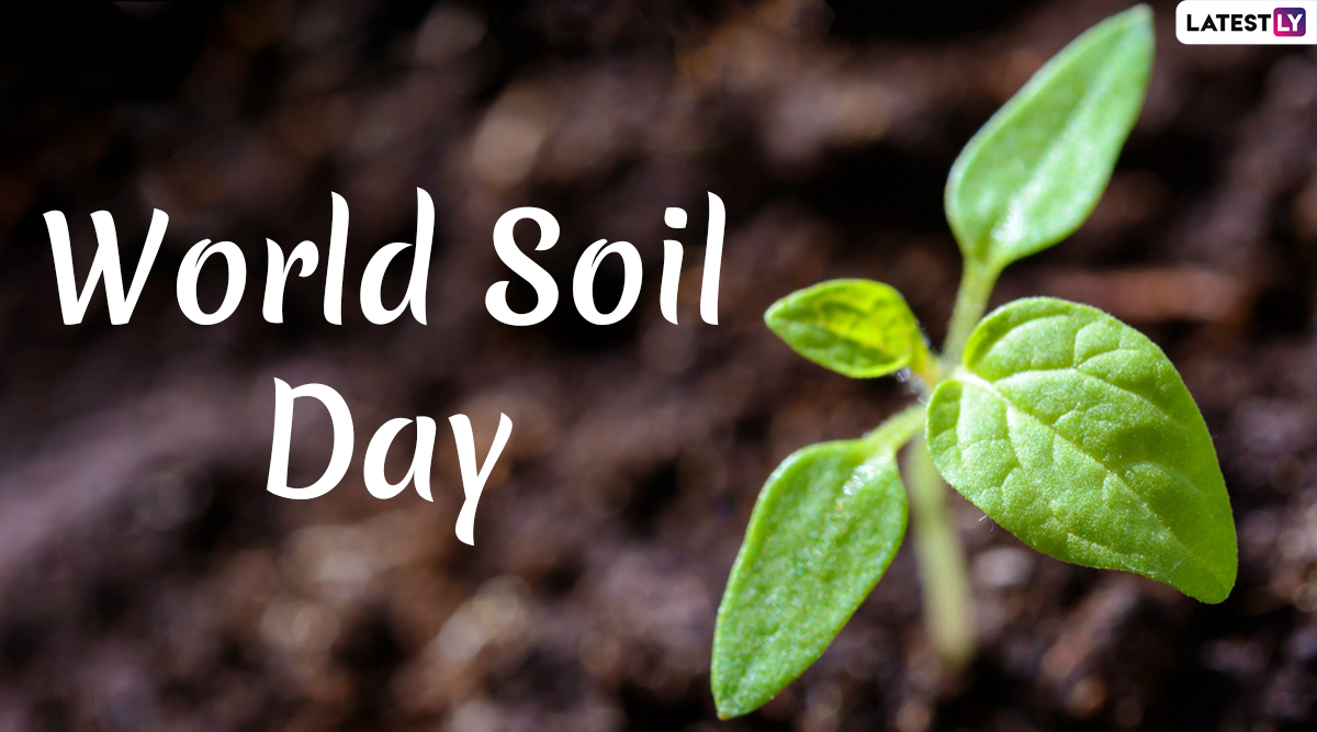 World Soil Day 2019 Date: History, Significance and Theme of This Global Awareness Event You Should Know