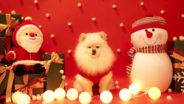 Santa Paws! These 7 Pics of Dogs Dressed in Red and White Theme Is Too Christmassy to Miss