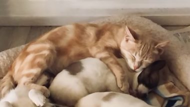 Katryn, The Cat Who Adopted Four Puppies After Losing Her Kittens and Grieving for Days, Goes Viral For Nursing and Sleeping With Them (Watch Video)
