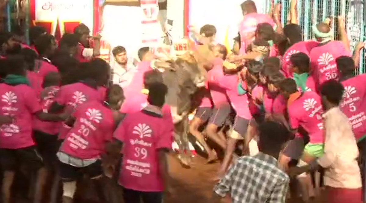 Jallikattu 2020: Bull Taming Sport Begins at Avaniyapuram Village of Madurai, Authorities Review Arrangements (Watch Video)