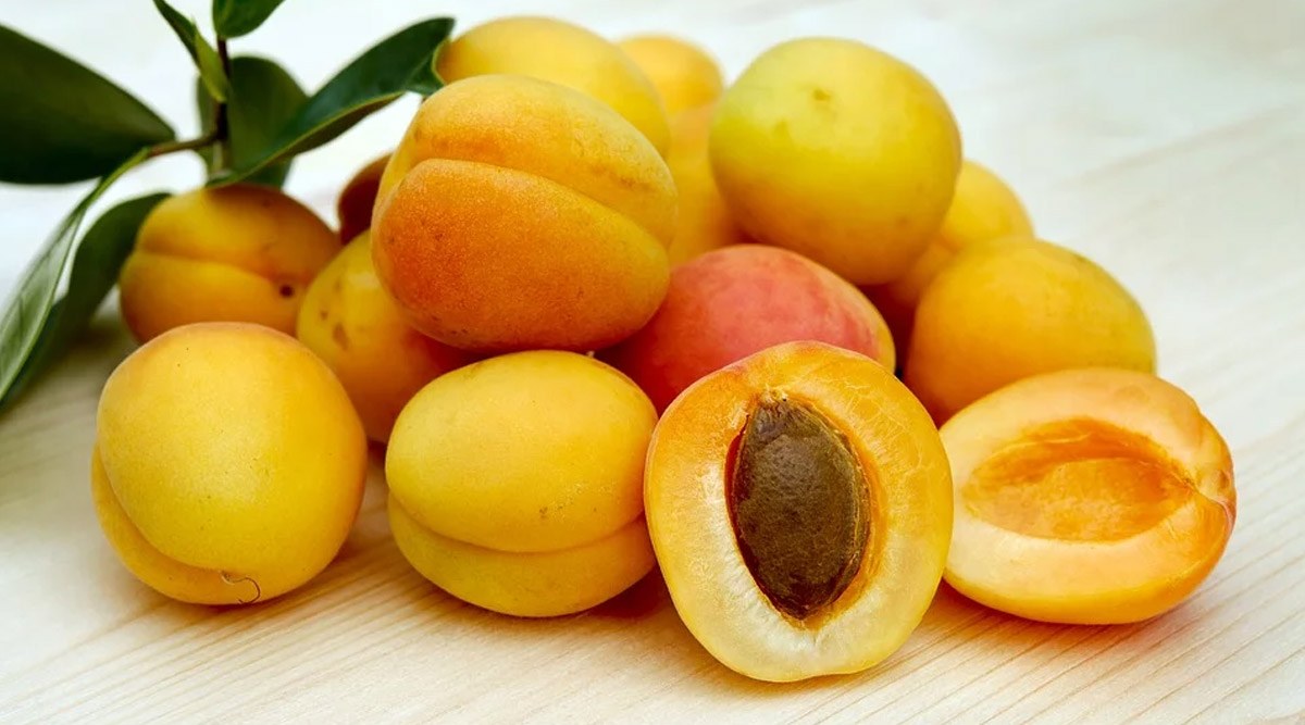 National Apricot Day 2020: From Glowing Skin to Weight Loss, 5 Reasons Why You Must Include Apricots in Your Diet