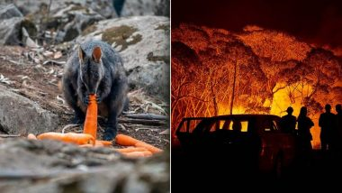 As Australian Bushfires Continue to Rage, Here Are a Few Heartwarming Stories That Will Move You (Pics & Videos)