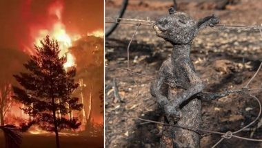 Australian Bushfires: Heartbreaking Viral Picture of Kangaroo Burnt to Death While Escaping From Raging Fires Shows The Reality of This Disaster