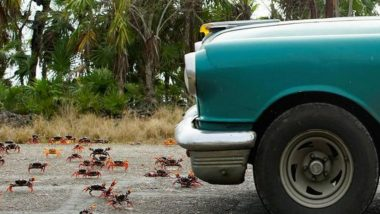 'Car Shoes' to Save Migratory Crabs from Getting Crushed Under Vehicles