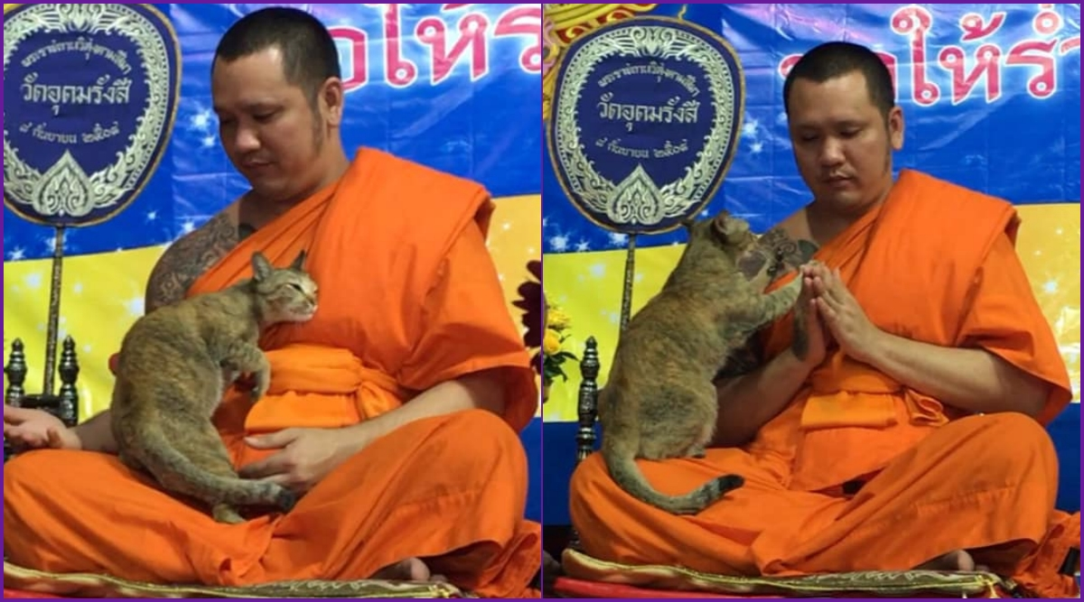 Cat Disturbs Buddhist Monk During 5-Hour-Long New Year Prayers in Bangkok Temple (Adorable Video Goes Viral)