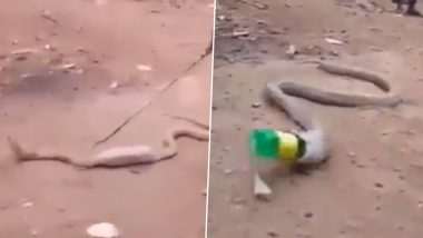 Cobra Swallows Plastic Bottle, Throws it Out After Locals Help the Snake (Watch Video)