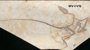 'Dancing Dragon' Feather Dinosaur Fossil Living 120 Million Years Ago Uncovered in China, View Pics