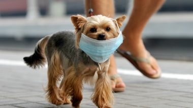 Dog Face Mask Sales Spike During Deadly Coronavirus Outbreak in China
