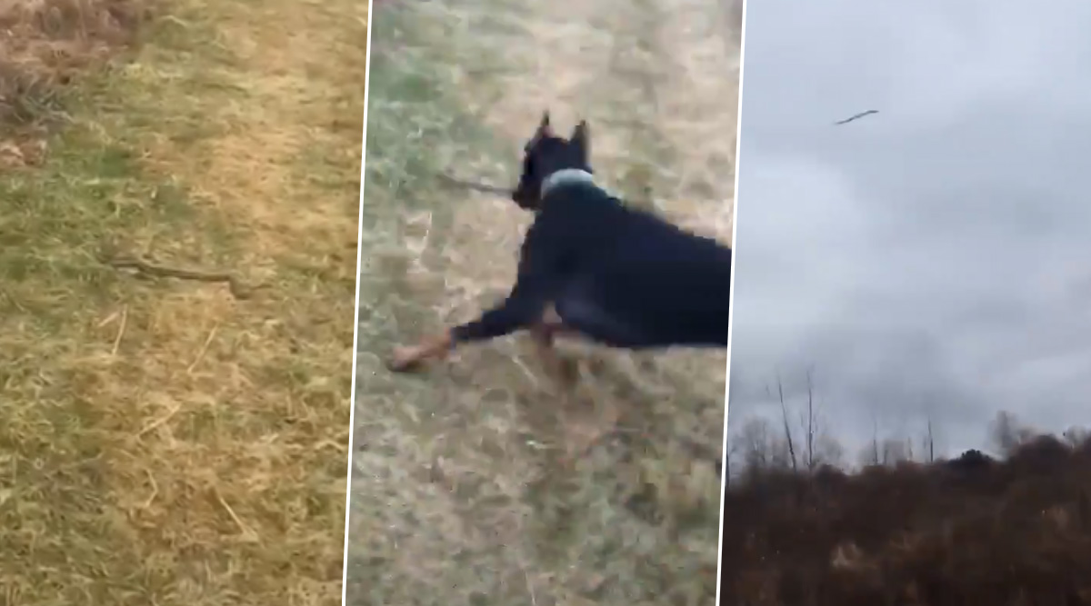 TikTok Video of Pet Dog Hurling Away Snake in The Field Goes Viral, But Twitter Has Mixed Reactions About This 'Good Boy'