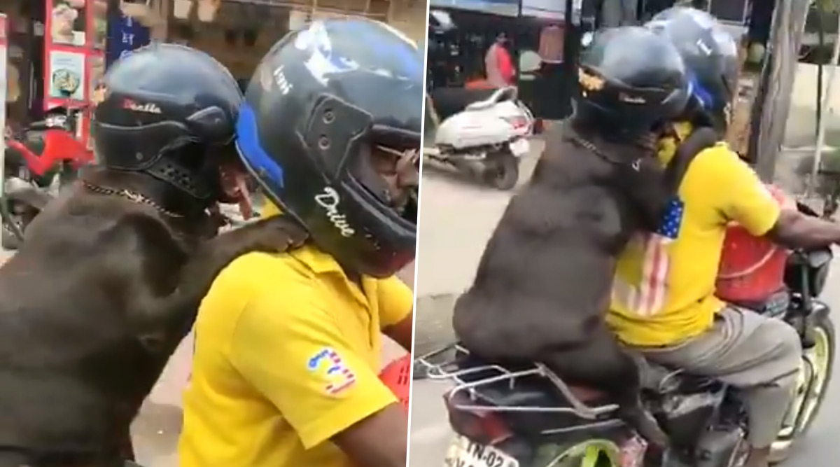 Dog Wears Helmet While Riding Pillion on a Bike in Tamil Nadu, Viral Video Gets Mixed Reactions From Netizens