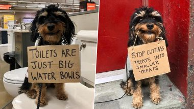 Dog With Protest Signs is New Version of Viral 'Dude With Sign' Memes and Jokes (Check Funny Pics)
