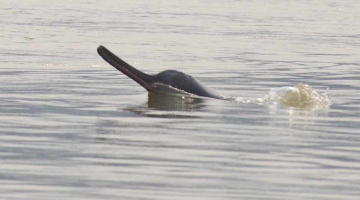 Rare Deep Sea Dolphins Wash Up on Aussie Beach
