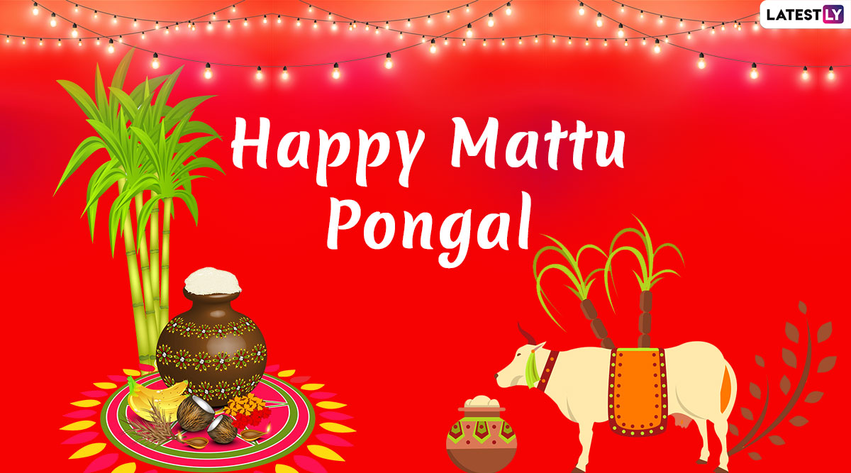 Mattu Pongal Images & Kanuma Telugu Greetings HD Wallpapers For Free Download Online: Wish Happy Pongal and Sankranti With WhatsApp Stickers, GIF Greetings and Messages