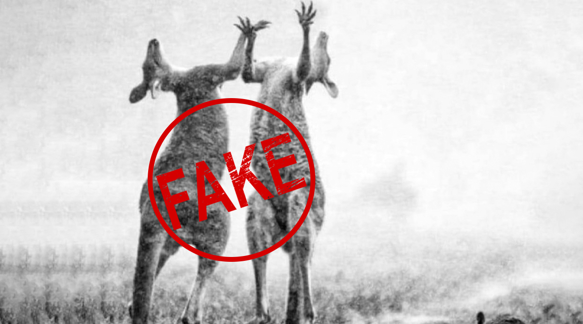 Fact Check: Picture Showing Kangaroos Jumping in Rain After Mild Shower in Australia Provides Relief From Wildfire Real or Fake?