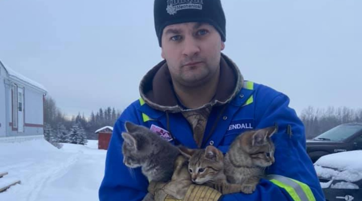Man Uses Hot Coffee To Rescue Kittens From Freezing Temperatures in Canada (Watch Video)