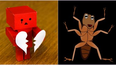 Valentine's Day Gifts For Your Ex! This Zoo Will Let You Name a Cockroach After Them and Feed it To a Meerkat on February 14