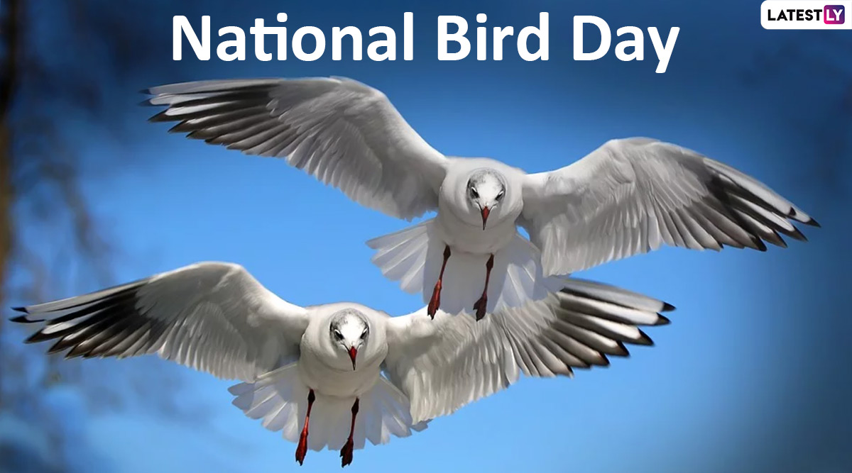 National Bird Day 2020 Date: Know History and Significance of The Day Dedicated Towards Bird Welfare