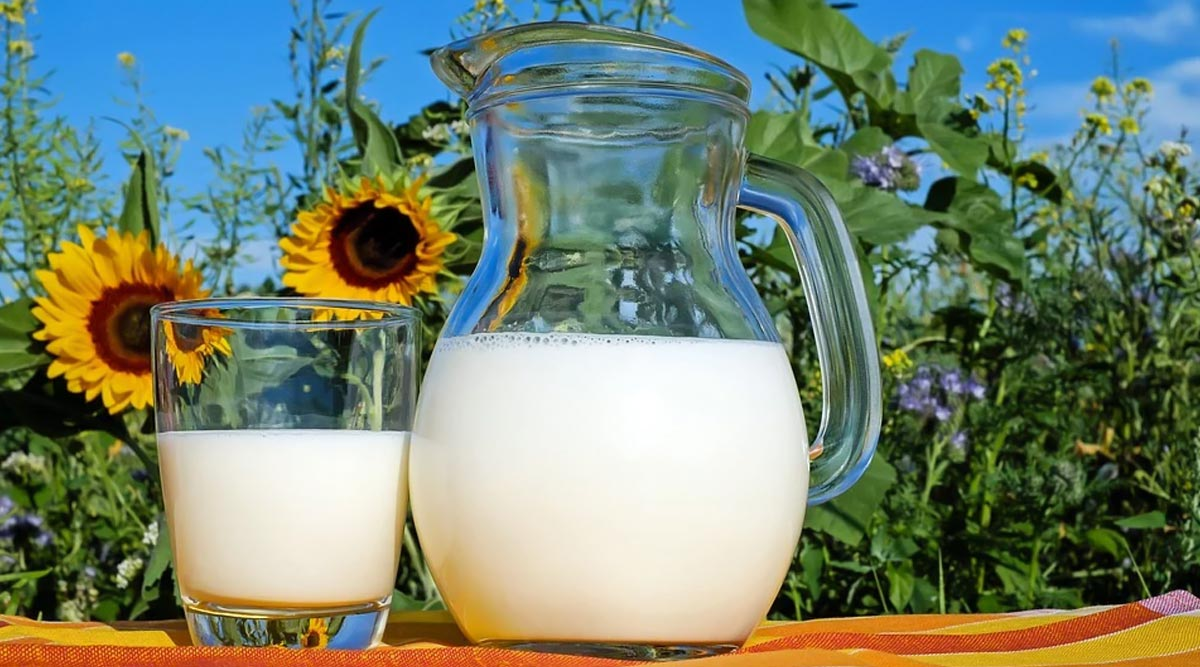 National Milk Day 2020: Fun Facts About Milk That Are So Interesting You'll Say, 'OMG!'