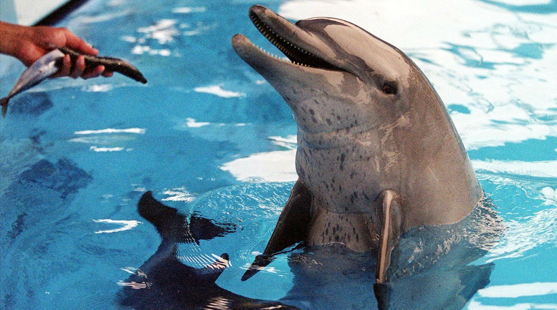 Hong Kong's Ocean Theme Park To End Dolphin and Sea Lion Shows