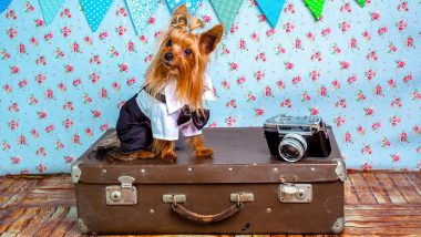 Travel Tip of the Week: 8 Things to Remember If You Are Planning a Pet-Friendly Vacation
