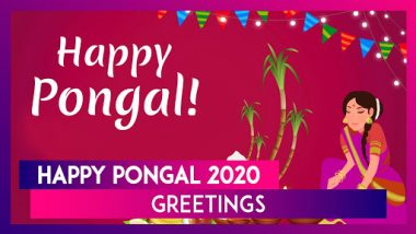 Happy Pongal 2020 Greetings: WhatsApp Messages, Quotes, Images and Wishes for the Harvest Festival