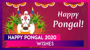 Happy Pongal 2020 Wishes: WhatsApp Messages, Greetings, Quotes and Images For Thai and Mattu Pongal