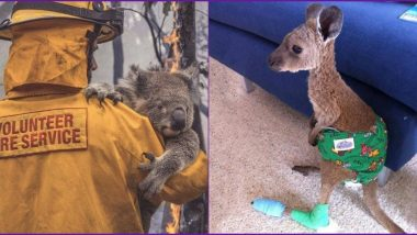 Australian Bushfires: These Kangaroo and Koala Rescue Pics and Videos Will Leave You in Tears