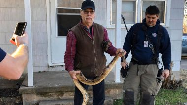 SHOCKING! 6-Foot-Long Snake Found Hiding in Sofa, Photo of GIANT Boa Constrictor at Kansas Residence Goes Viral