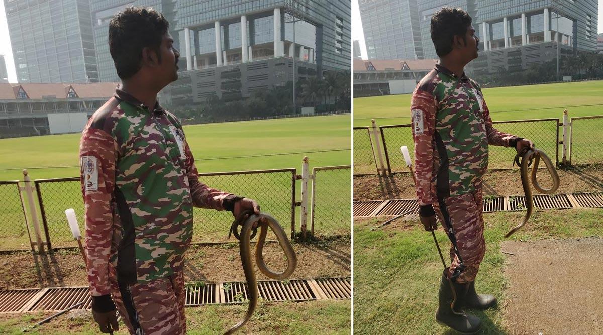 Two 'Rare Catches' During Mumbai vs Karnataka Ranji Trophy Match at BKC in Mumbai! View Pic of Dismissed Rat Snake