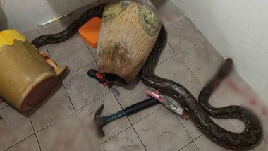 Thailand: Mother Fights Off Huge Snake That Bit Her, Injures Self While Slashing It With Cutter! (View Pic)