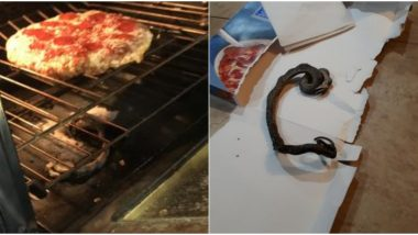 Snake With a Pizza? North Carolina Couple Finds Dead Reptile in Their Oven While Baking Dinner (See Viral Pics)