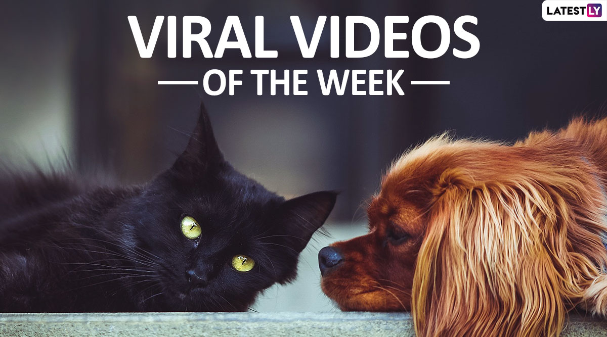 Viral Videos of the Week: Dog's First Sled Run to a Cat Rescued by Old Man, Fur Buddies Rule the Internet in the First Week of 2020!